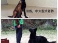 承接宠物寄养管理
