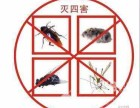 西安北郊灭蟑螂如何灭蟑螂就找诚信美洁来帮忙 彻底消除