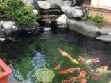 成都别院鱼池设计