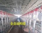 大型猪场安装自动化料线自动喂猪设备厂家免技术费指导