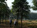 周口楸树研究所,楸树,最大楸树