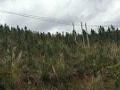 (优质)广西省柳州市融安县550亩林地出租