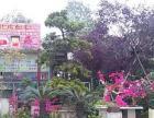 鲜花绿植,盘景,绿化工程