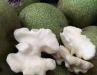 牛牛家绿色采摘园迎来采摘季(红枣,核桃,石榴,苹果