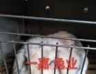 【广西大型兔场招加盟】加盟/加盟费用/项目详情