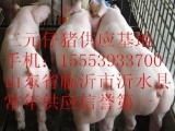 小猪苗今天价格/山东三元仔猪价格