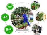 苏州新区专业绿植租摆绿化养护办公室绿植租赁
