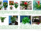 重庆租赁花卉价格