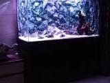 上海魚缸專賣上海魚缸清洗魚缸維護
