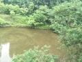 伊川县城关镇大庄村水库鱼塘共20000平米