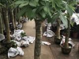 园林绿化养护 植物墙庭院绿化 花卉绿植销售施工养护