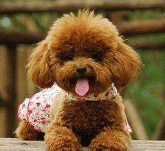 好可爱的小狗狗New Dog