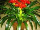 北京绿植花卉租赁租摆销售