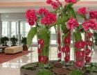 苏州花卉绿植租摆,办公室绿植租赁,小园丁值得信赖!