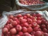 山东红富士苹果山东红富士苹果价格批发