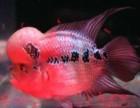 北京清洗鱼缸 观赏鱼护理 鱼缸养护 鱼缸消毒 观赏鱼租摆
