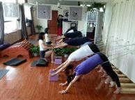回龙观润泽瑜伽苑特色小班课程报名中
