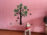 鄭州訓犬師培訓在哪里