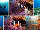 一年只开六个月的斯米兰群岛旅游开始啦