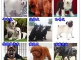 廣州寵物狗場 廣州友誼狗場繁殖世界各類名犬寵物狗
