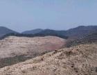 安徽省安庆市望江县鸦滩镇10000亩林地转让