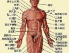 专业调理身体亚健康及各种痛症