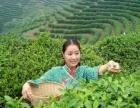 提供红茶,绿茶代加工,定制