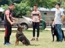 广州粤虎太萌宠物狗狗训练学校欢迎来电咨询