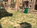 碧桂园毛坯别墅可做仓库 仓库 230平,花园200平