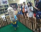 苏州姑苏区租荷兰猪-草泥马转租-孔雀出租-生日派对展览庆典