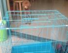 宠物狗的笼子