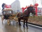 中山沙溪哪里出租马车马匹 中山马车与马匹租赁公司
