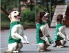 北京宠物训练学校--训犬50一天上门接送
