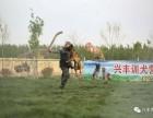 北京兴丰训犬基地承接各地宠物狗代训养业务