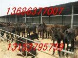 肉驴养殖效益肉驴育肥品种肉驴供求价格