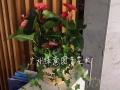 顺德大良写字楼绿植租摆,花卉出租出售,专业服务好。