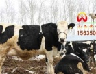 供应肉牛品种肉牛利润和养殖成本