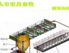 全自动化料线500头猪场设计安装泊头市专业厂家世昌畜牧