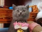 宠物猫咪活体售卖