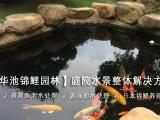 金华锦鲤优质锦鲤鱼金华别墅鱼池设计