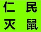 成都锦江区专业灭鼠公司 逮老鼠 杀白蚁 灭蟑螂 灭跳蚤公司