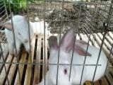 自己家里养的兔子
