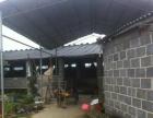 上林县大丰周边 养猪场730平米 出租