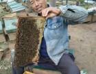 南京哪里有卖纯天然蜂蜜的?