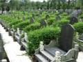 石岭公墓,免费接送客户
