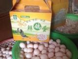 常年出售种鸽 乳鸽 种鸽蛋