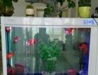 森森鱼缸水族箱