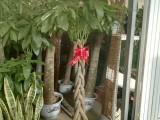 昌平庭院绿化设计 假山鱼池 果树苗木 绿化养护