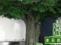 承接假山假树