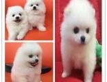 北京适合养什么狗 小狗图片